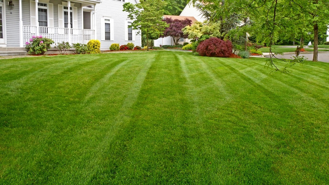 Lawn Care Slidell